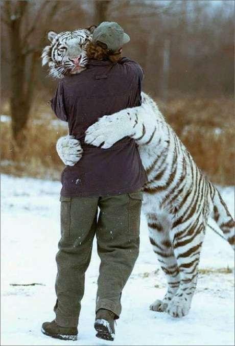tiger-hug1